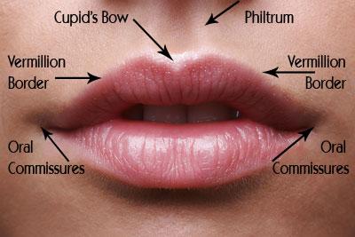 Lip_Augmentation Information on CosmeticSurgeryForums.com