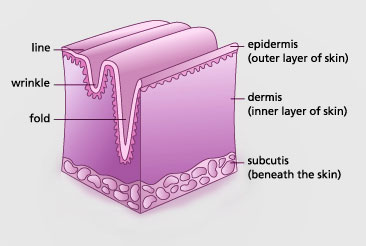 Image showing the difference between a line, wrinkle and a fold in the facial area